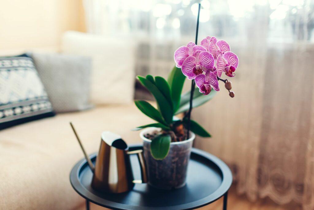Gießen einer Orchidee