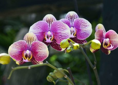 Orchidee Mit Lila Blüte