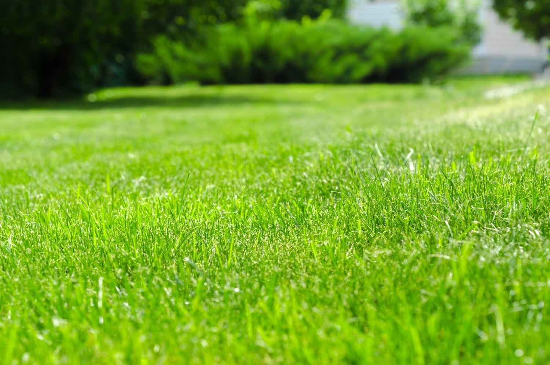 Grüne Rasenfläche