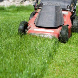 Rasen Mähen: Tipps & Tricks Rund Ums Rasenmähen