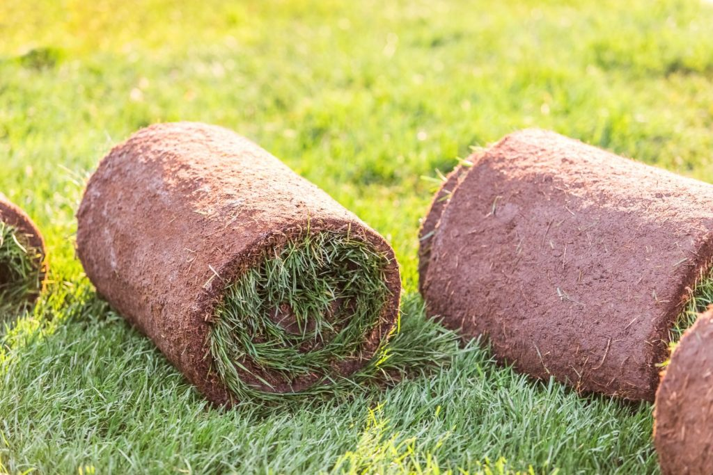Rollrasen Rollen liegen im Gras