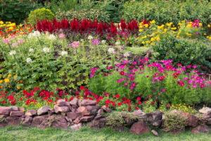 Buntes Blumenbeet Steinterrasse Garten Blumenbeet