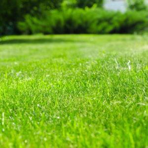 Rasen Anlegen: Rasen Säen & Rollrasen Verlegen Im Vergleich