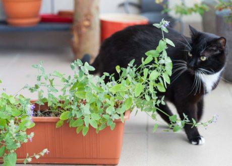 Katz Vor Blumentopf