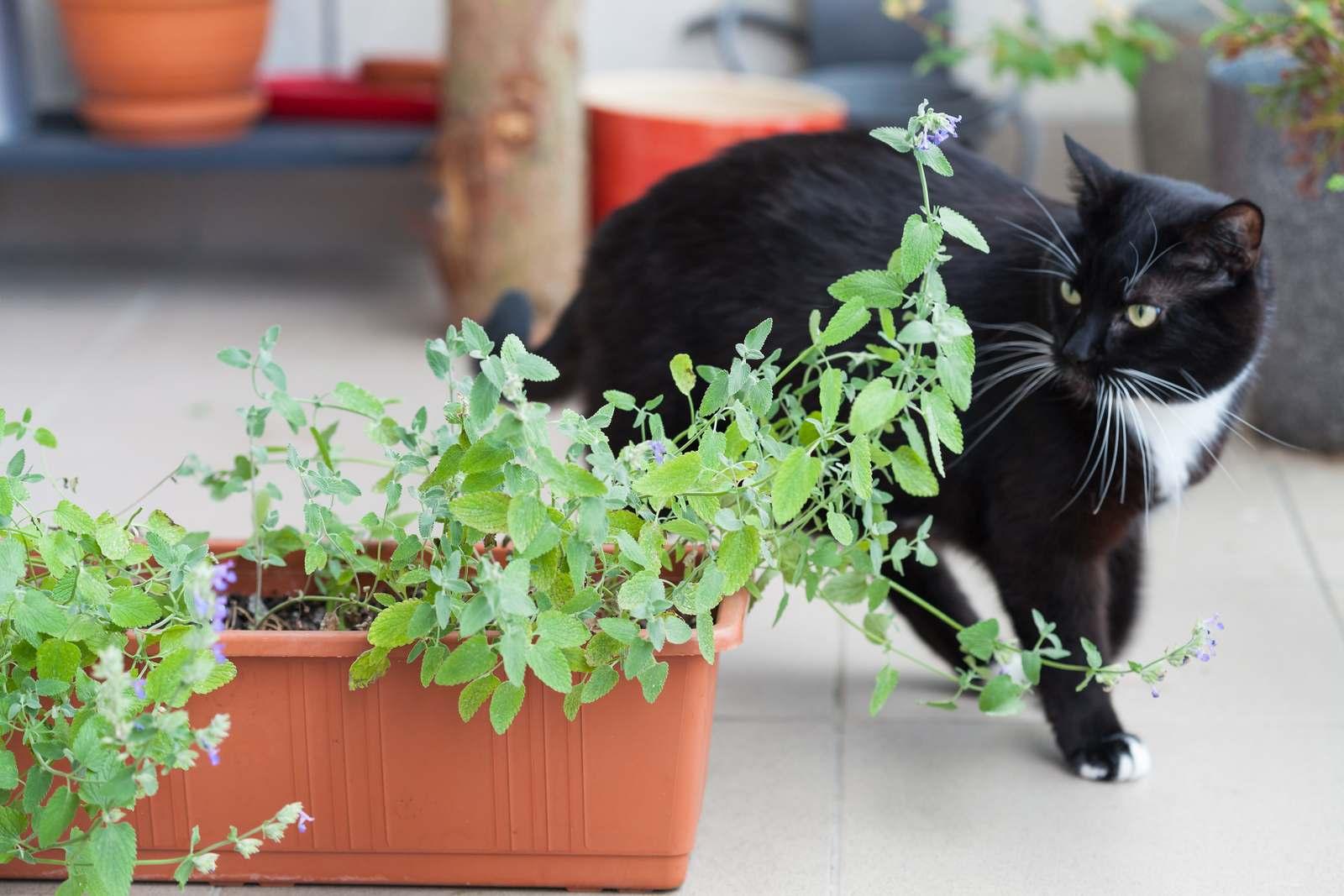 katzenschreck im test effektive abwehr gegen katzen im garten plantura. Black Bedroom Furniture Sets. Home Design Ideas