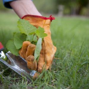 Unkraut Im Rasen: Unkrautvernichter & Alternativen