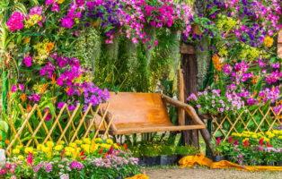 10 tipps wie sie ihre dahlie zum strahlen bringen plantura. Black Bedroom Furniture Sets. Home Design Ideas