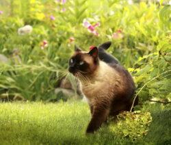 Braune Katze Im Garten