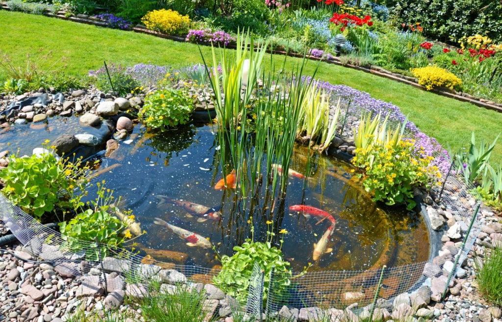 Gartenteich Goldfische