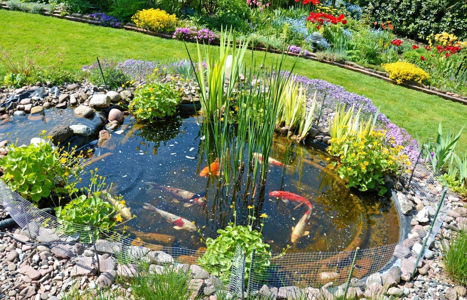 Ein Gartenteich Als Wohlf Hloase 5 Tipps Rund Um Den