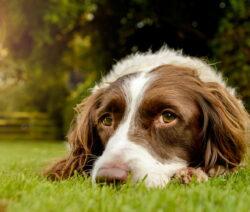 Hund Liegt Im Garten