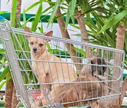 Hunde Im Einkaufswagen Yucca Im Hintergrund