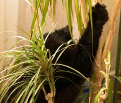 Katze Kratzt An Pflanze Yucca