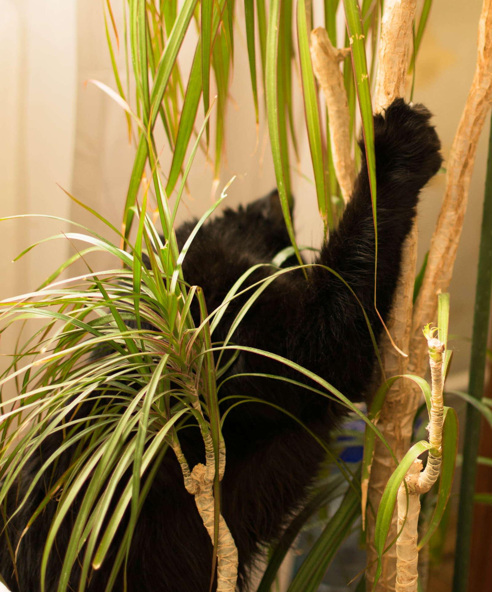 yucca palme ist die yucca palme giftig plantura. Black Bedroom Furniture Sets. Home Design Ideas