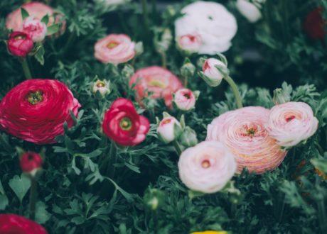 Blumen Im Garten Rot Rosa Weiße Blüten