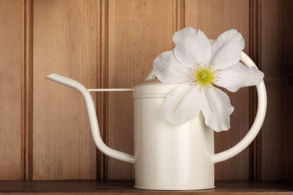 Weiße Blüte Clematis in weißer Gießkanne