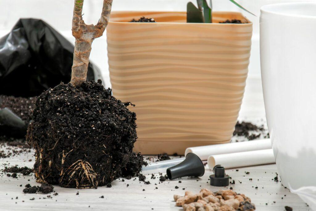 Substrat-Tausch der Yucca