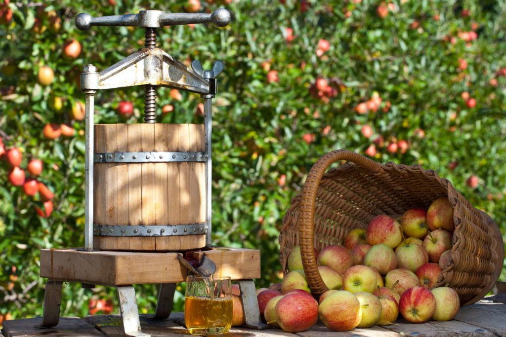 Apfelsaft pressen Mosterrei Pressmaschine Äpfel im Korb apfelbaum