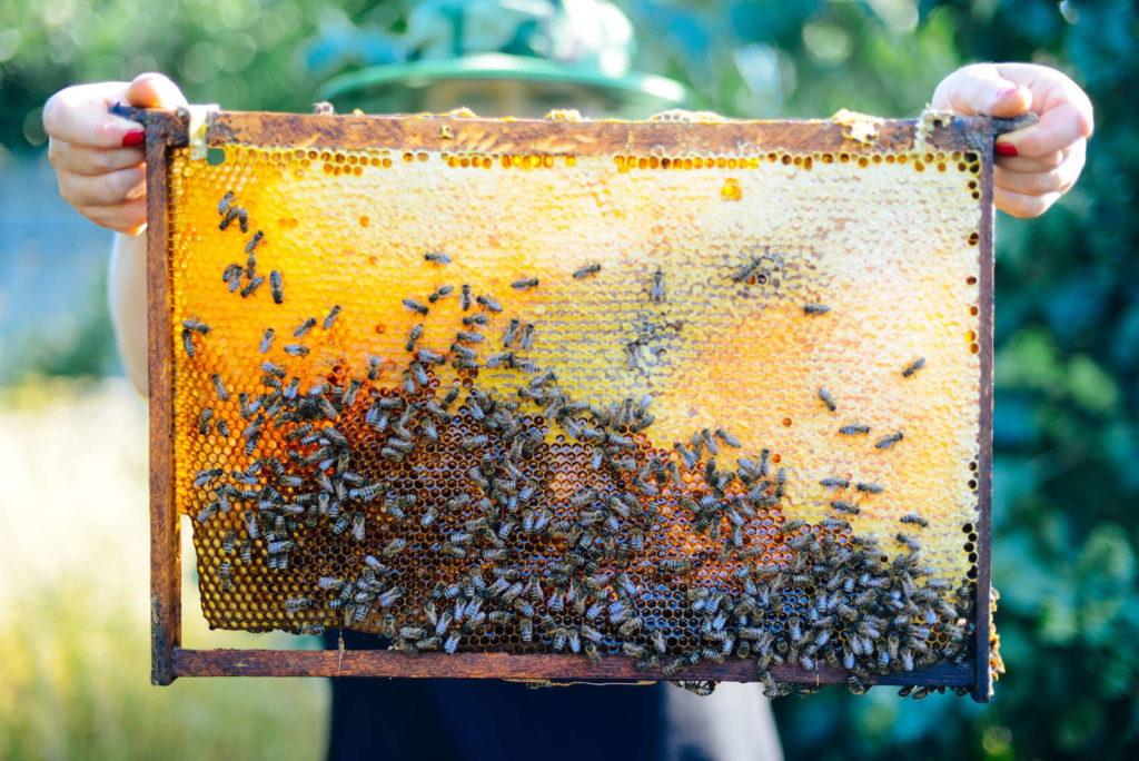 Bienen Bienenwaben Honig Ernte Imker