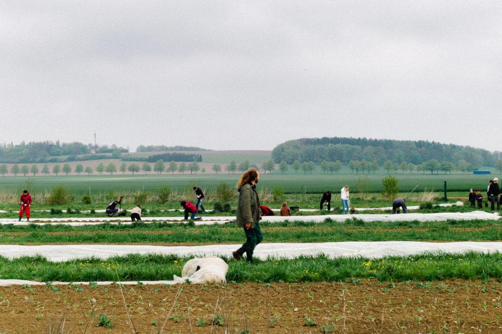 Solawi Hannover solidarische Landwirtschaft