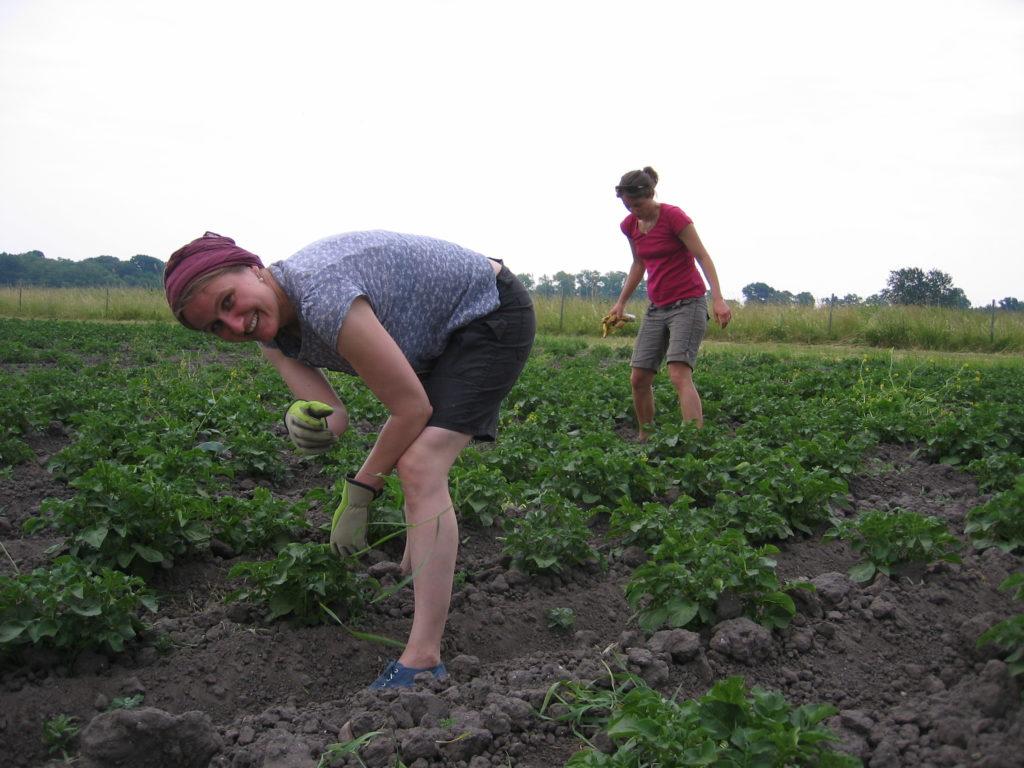 Sterngartenodyssee Solidarische Landwirtschaft