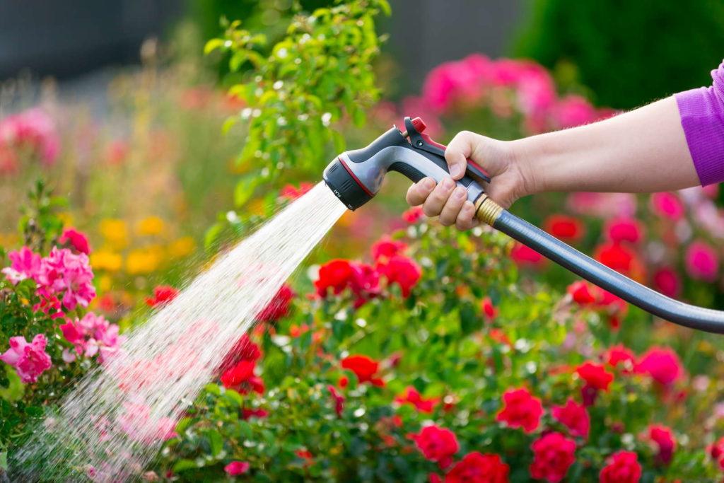 Blumen gießen mit Gartenschlauch