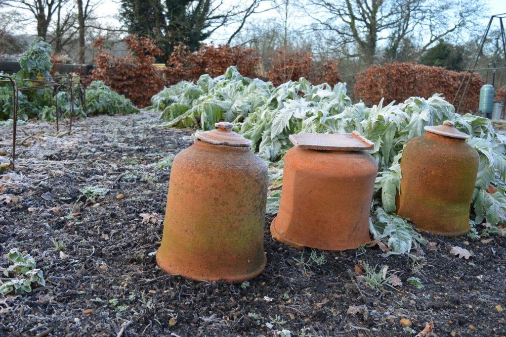 Frostschutz Rhabarber Tontöpfe überwintern