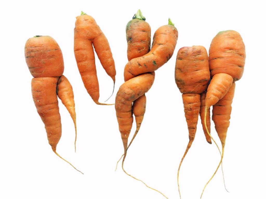 Krumme Karotten ausdünnen