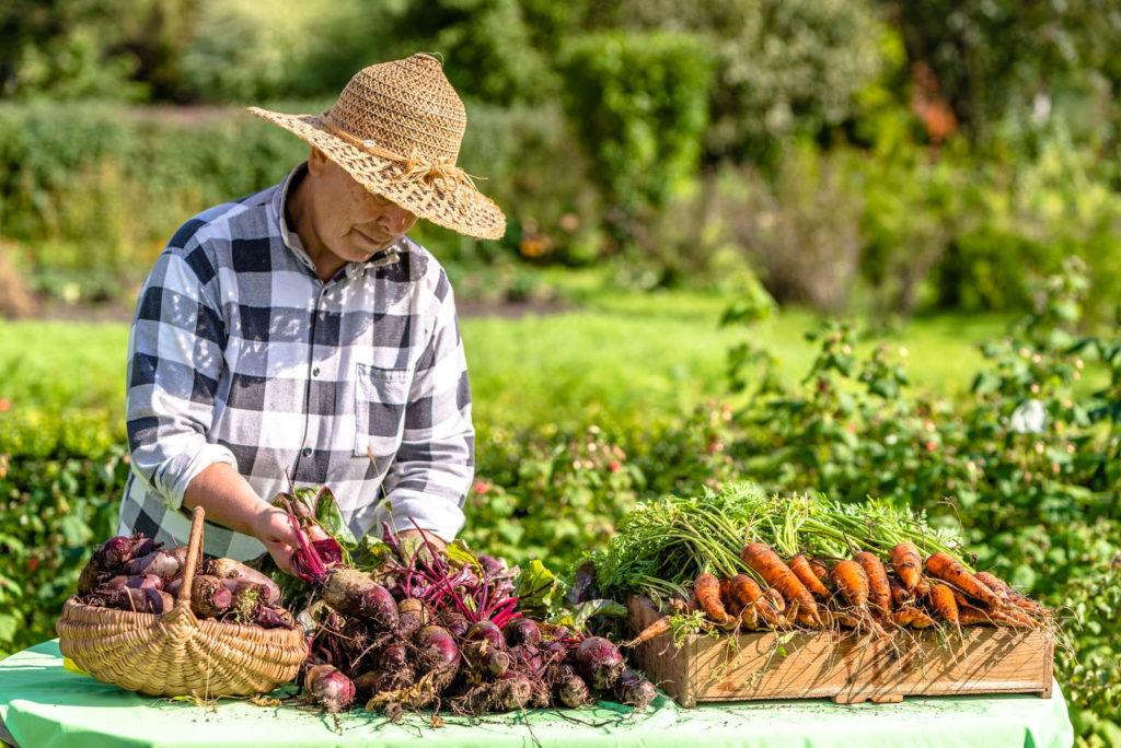 Landwirt mit Karotten und Rote Bete Ernte Hofladen Bauer mit Strohhut