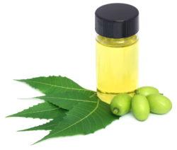 Neem-Öl Natürliches Pflanzenschutzmittel