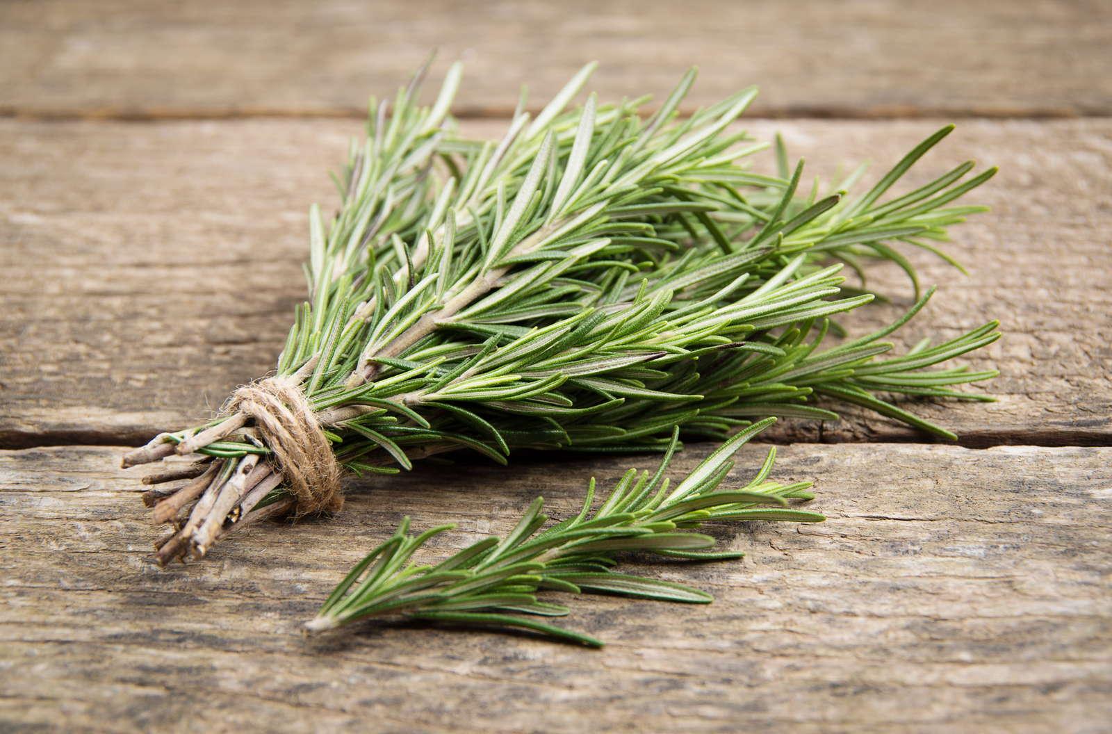 10 Tipps für frischen Rosmarin aus dem eigenen Beet - Plantura