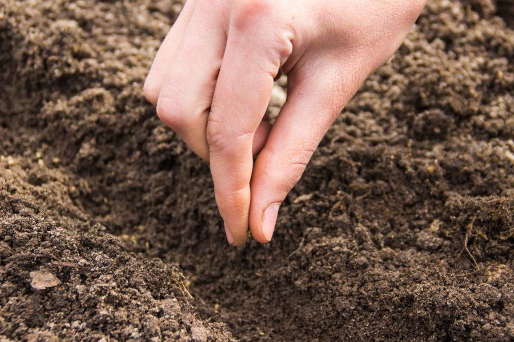 Lieblings 10 Tipps für die perfekte Karotte aus dem eigenen Garten - Plantura #BC_97
