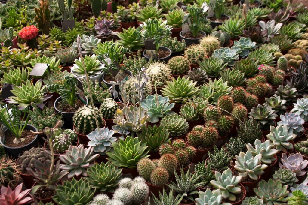 Sukkulenten Vermehren Pflegen Amp Pflanzen Plantura