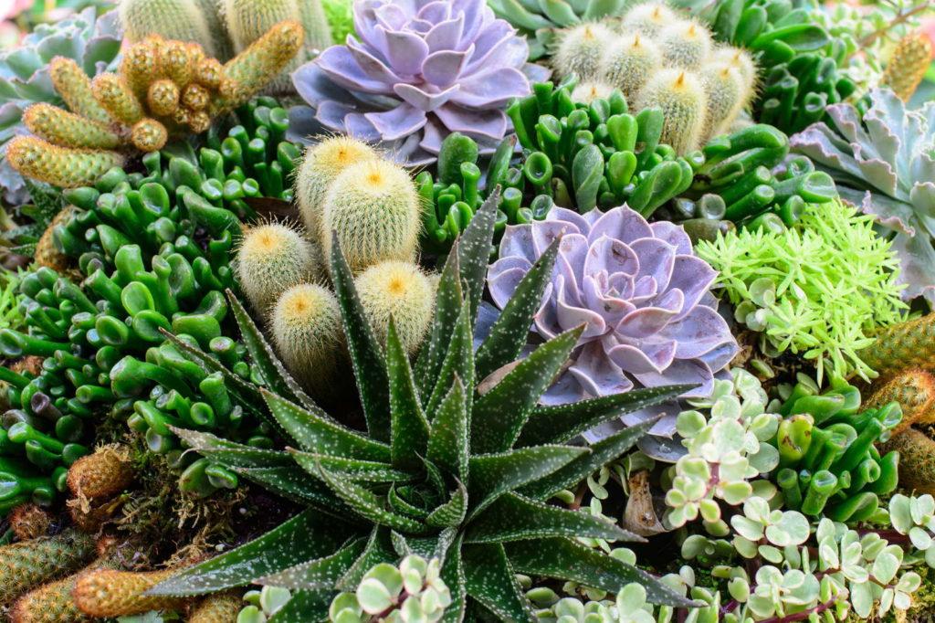 Sukkulenten Kakteen im Garten Deko Pflanzideen