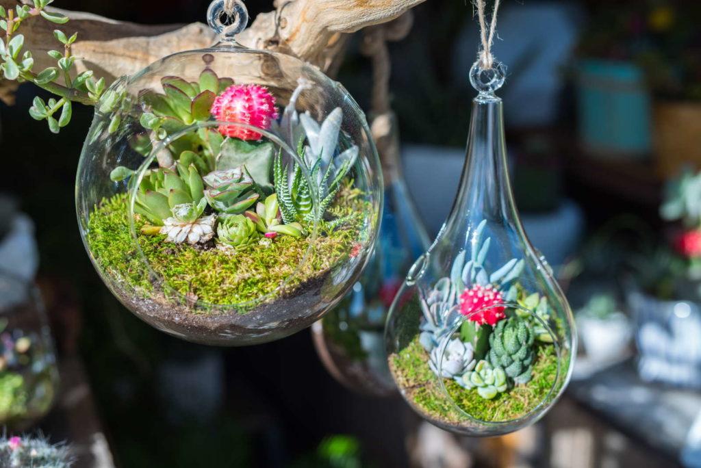 Sukkulenten in Glaskugeln hängend Deko