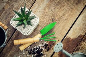 Sukkulenten Pflanzen Schaufel Harke