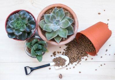 Sukkulenten: Vermehren, pflegen & pflanzen