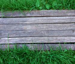 Versteck Für Rüsselkäfer Holzbrett Im Gras