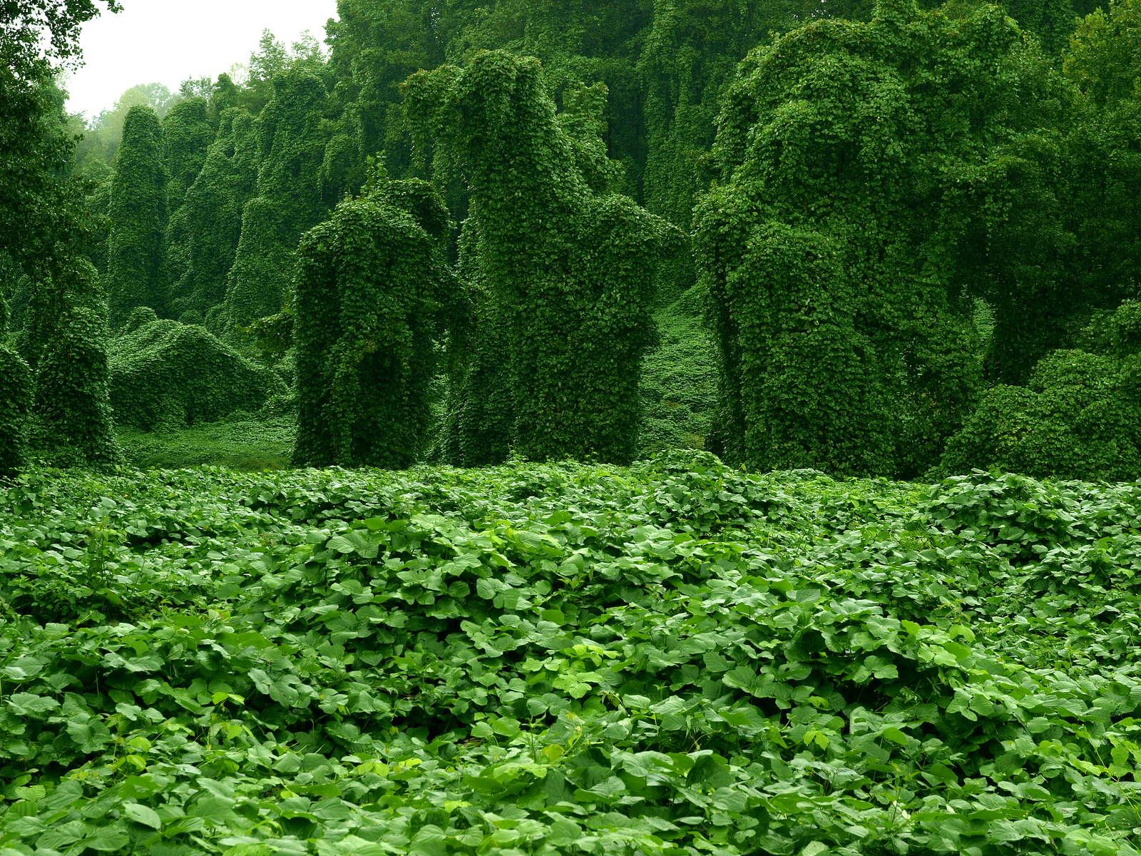 Die 5 Am Schnellsten Wachsenden Pflanzen Der Welt Plantura