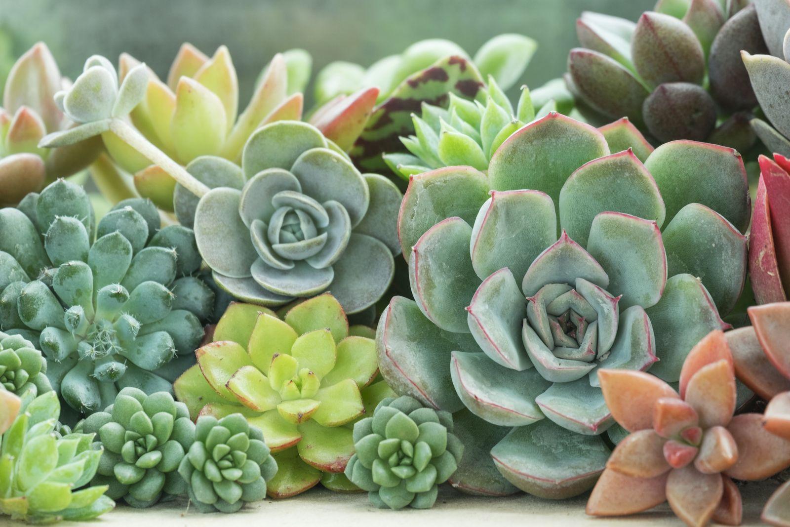 Sukkulenten Deko Kreative DIY Pflanzideen   Plantura