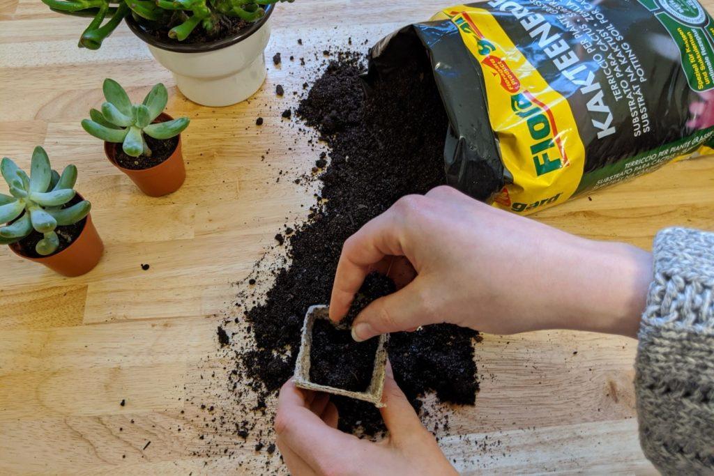 Anzuchttöpfchen wird mit Floragard Kakteenerde befüllt