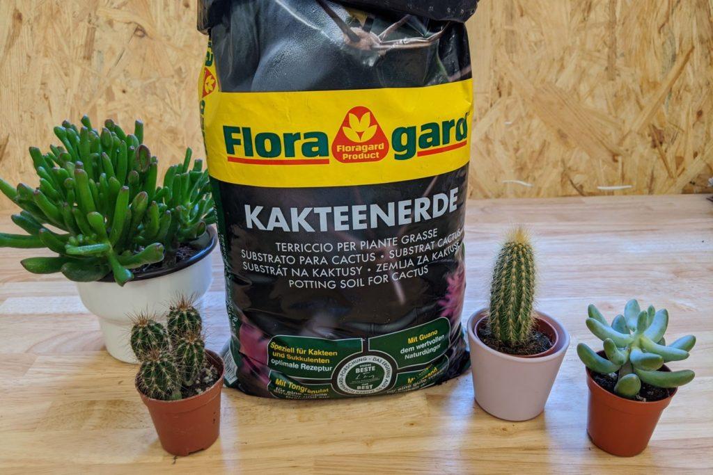 Floragard Kakteenerde und verschiedenen Sukkulenten