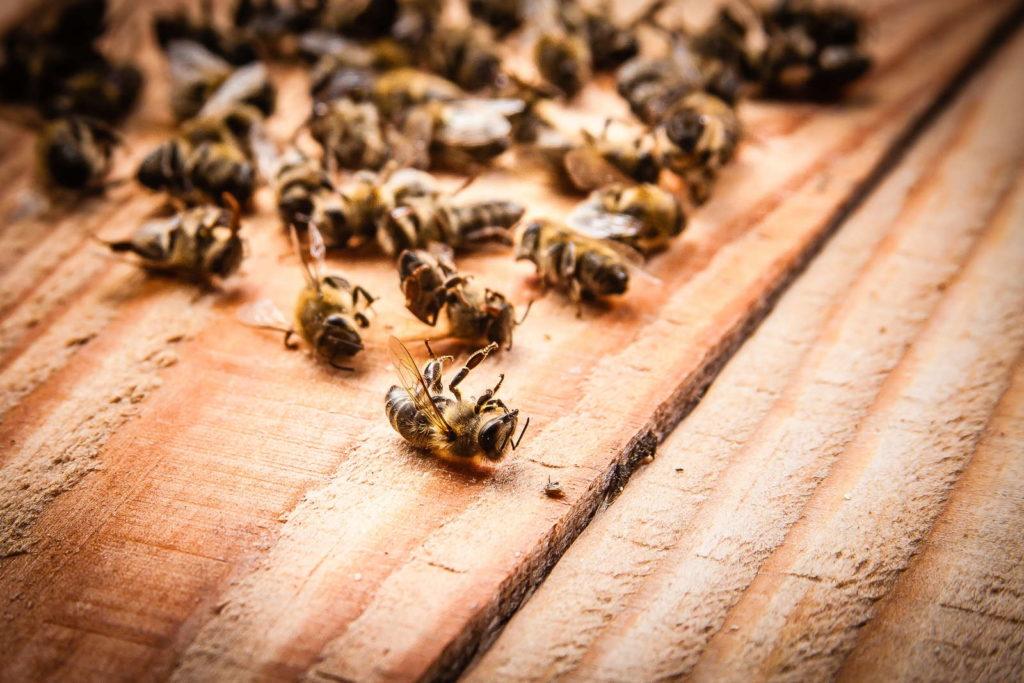 tote Bienen auf Holz