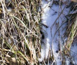 Beet Unter Schnee Und Stroh