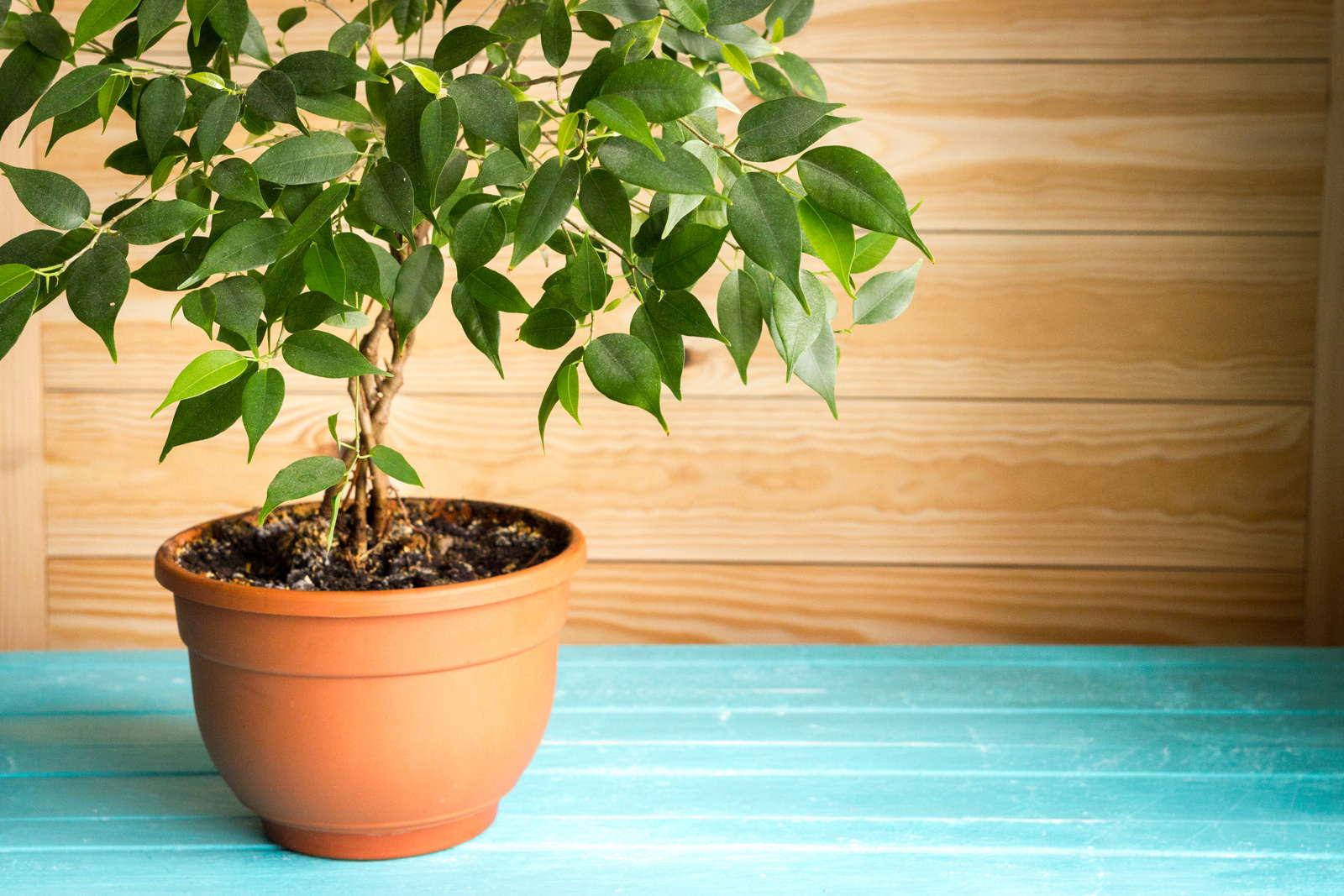Luftreinigende Pflanzen: Die Top 10 - Plantura