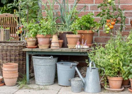 Diverse Grüne Topfpflanzen