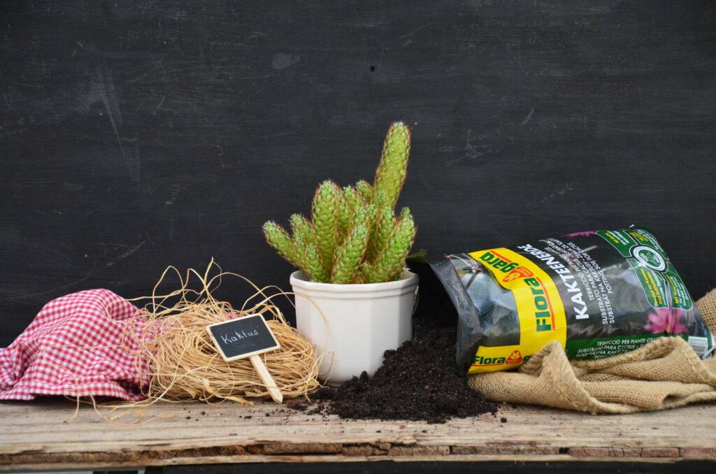Kakteenerde kaktus mit erde auf Holztisch natural