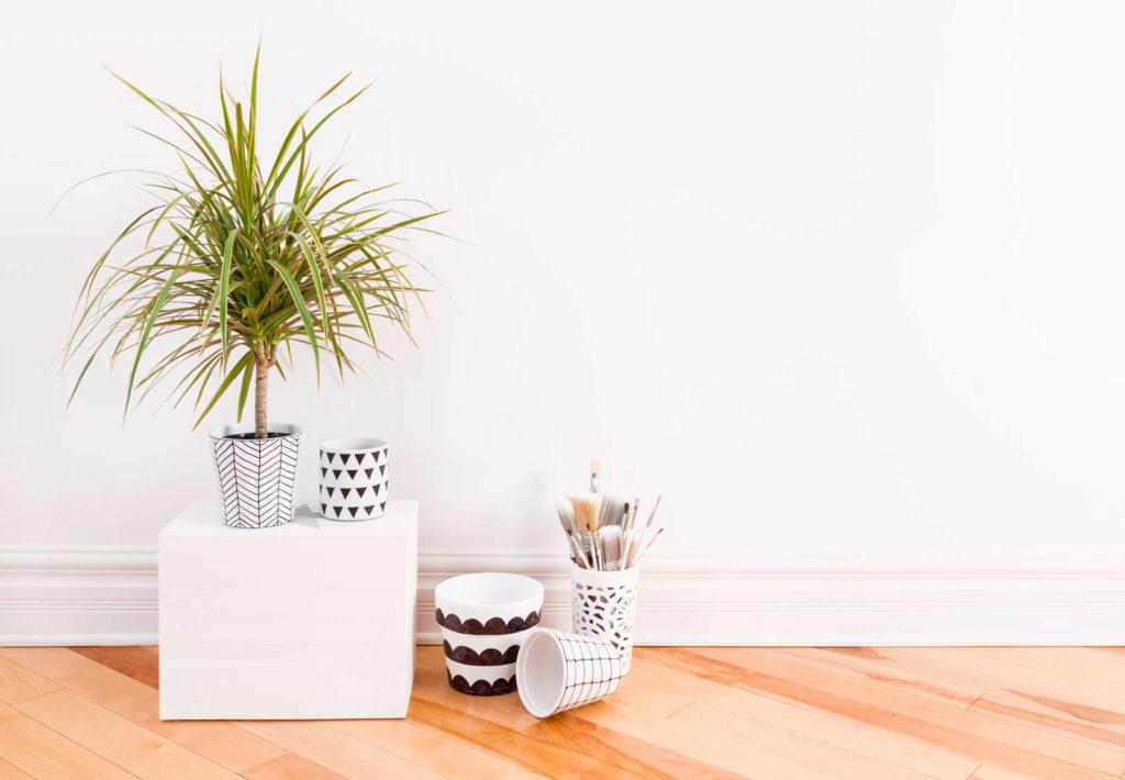 Dracaena mit Pinseln auf Schreibtisch