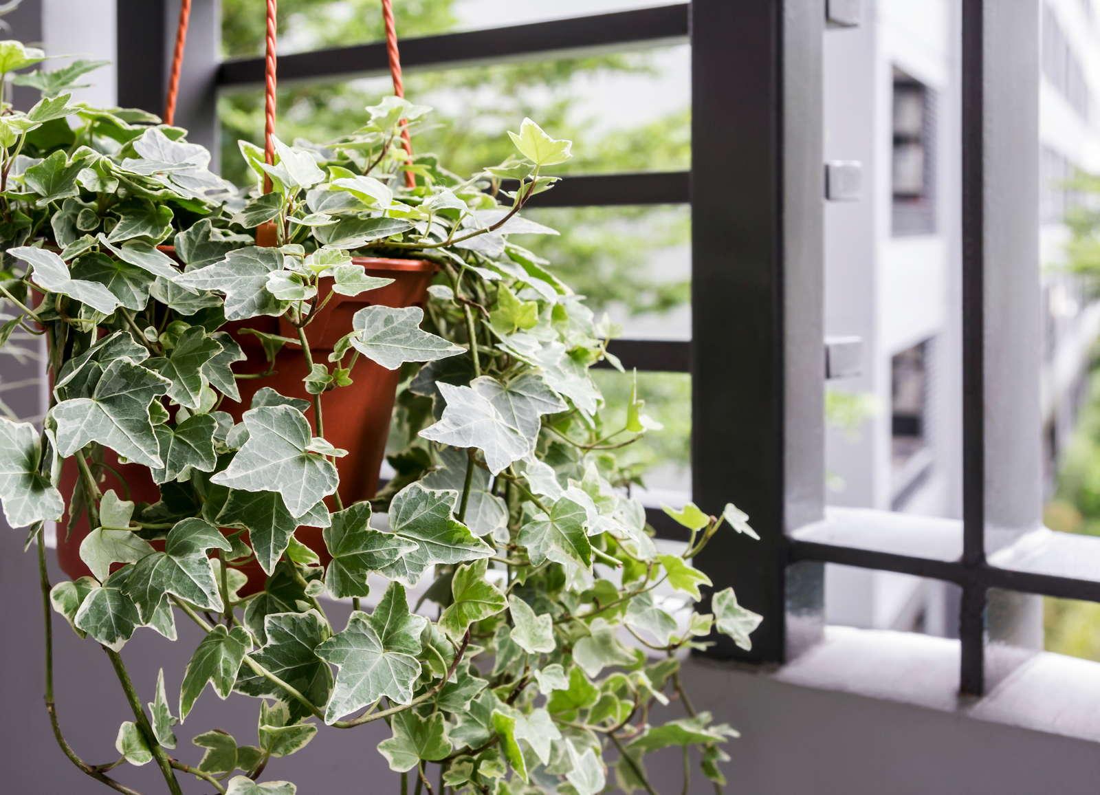 Luftreinigende Pflanzen: Die Top 10