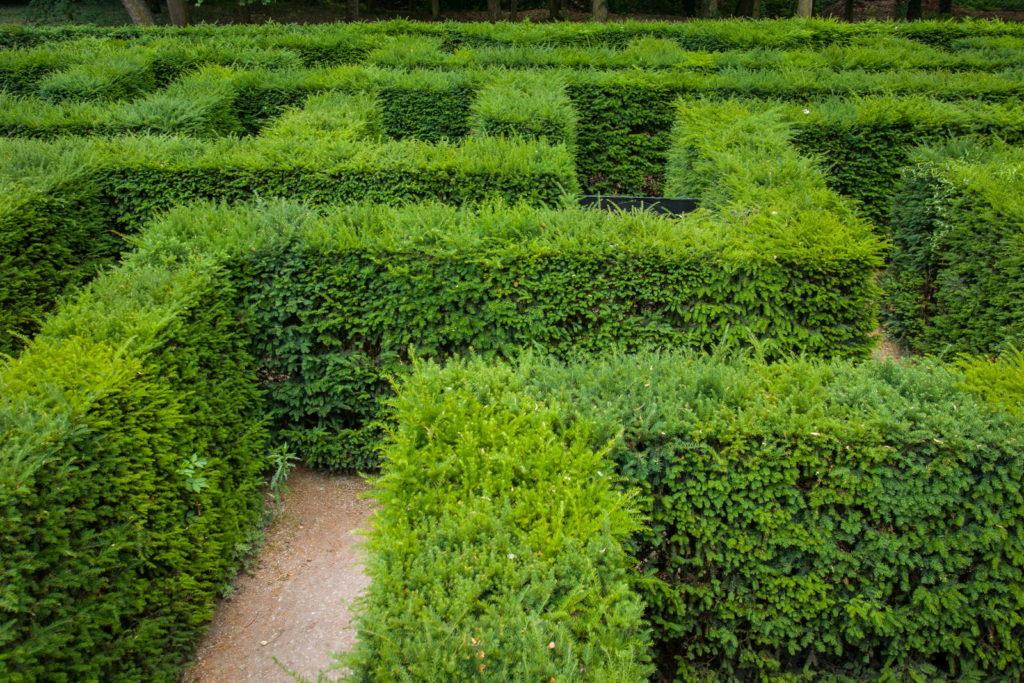 Eibenhecke grün als Labyrinth geschnitten